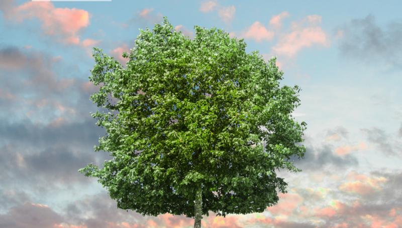 Arboles y cambio climático
