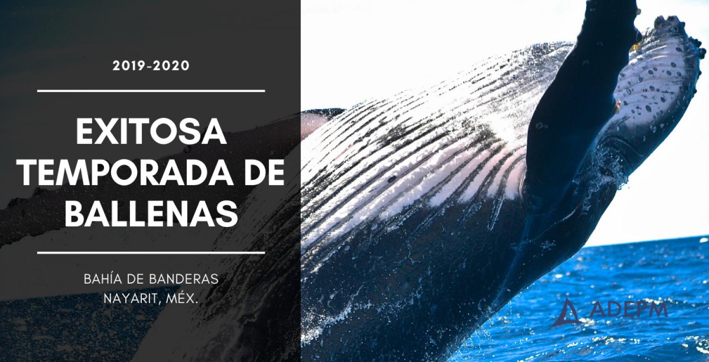 Rescates de ballenas
